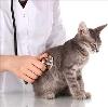 Ветеринарные клиники в Краснокамске